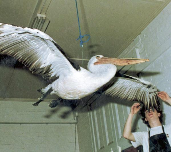 pelican mount