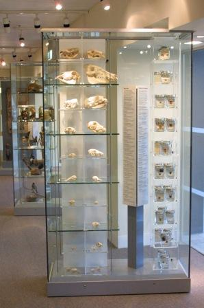 Cleaned Skulls and spirit specimens on display, Discovery centre Melbourne Museum