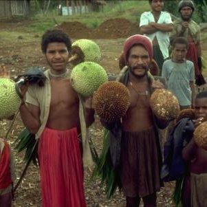 Pandanus-jiulianettii-fruit-collected-by-locals-from-high-al