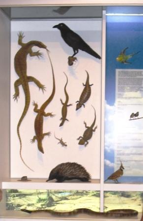 Central Australian Reptiles and Birds mounts Bush Tucker display Nyinkka Nyunyu Tennant Creek 2003